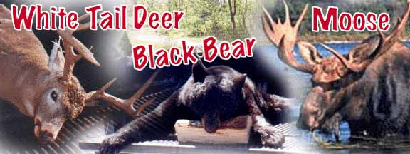 Taxis River Outfitters - Guided Deer, Moose and Bear Hunts in New Brunswick Canada