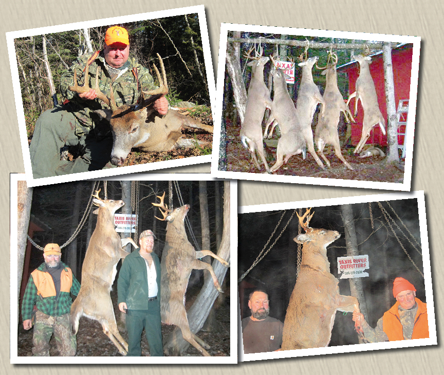 Deer - harvested at Taxis River Outfitters - Great Canadian Whitetail, Moose or Black Bear guided hunts and Salmon Fishing on the Miramichi