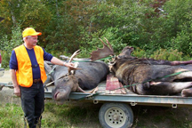 8 pt Bull Moose 36 inch Spread 765lbs