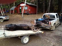 2 trophy moose taken in 2013 season