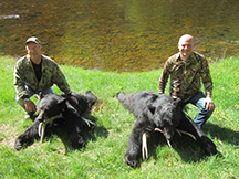 Sean & Larrys bears at taxis river outfitters