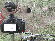 Spring Bear hunting at taxis river outfitters