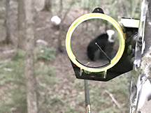 Spring bear hunting, see the bear in a bow site at taxis river outfitters